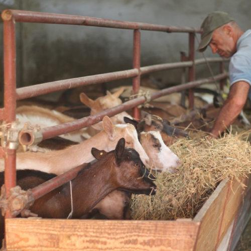azienda-agricola-11