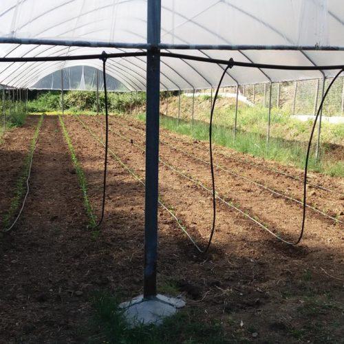azienda-agricola-2
